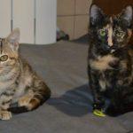 Pinky & Alina