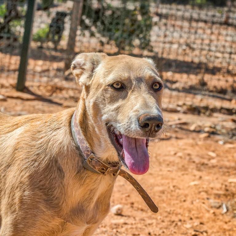 Honden adopteren uit het buitenland - Max