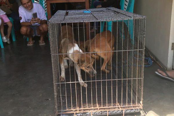tomohon-indonesie (14)