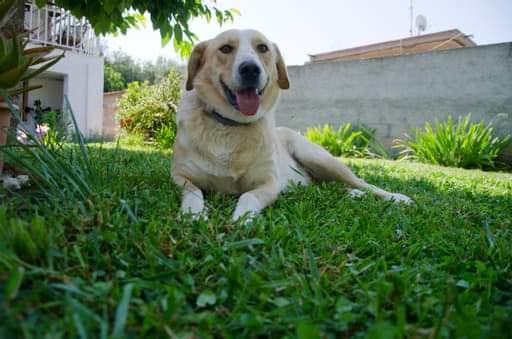 Honden adopteren uit het buitenland - Rex