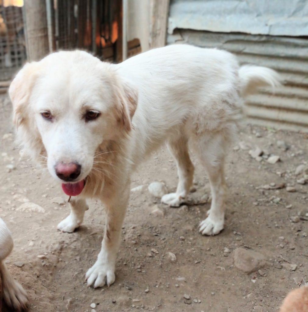 Honden adopteren uit het buitenland - Thelma